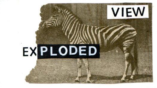 ev_6-zebra