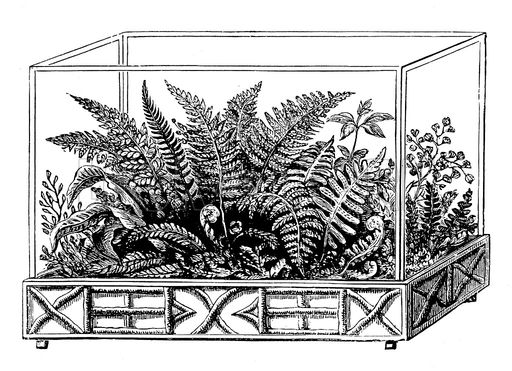 Wardian case with ferns